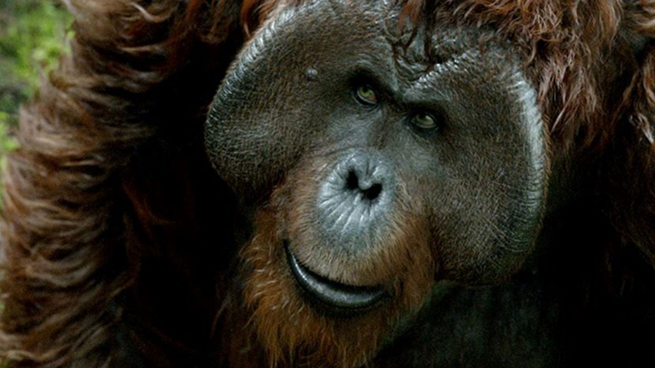 Karin Konoval Talks War for the Planet Planet of the Apes - Interview 2